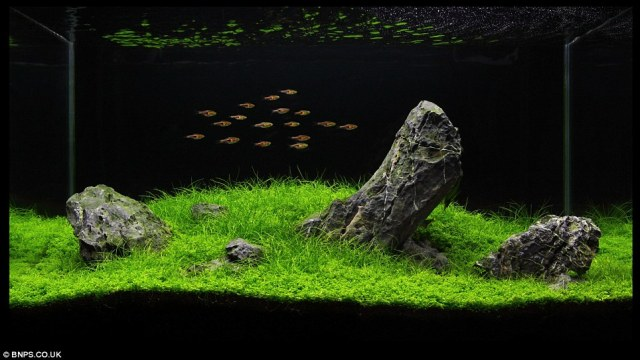 Zen and the art of fish tank maintenance: 'Aquascapers' herald the end