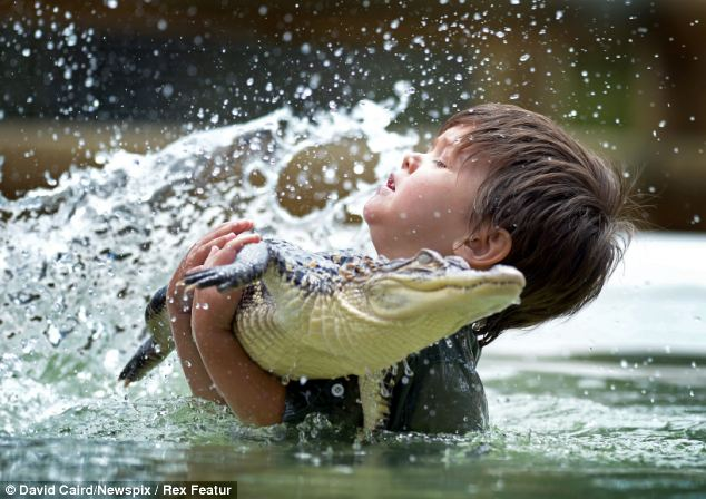 Splash: Three-year-old Charlie Parker has no fear as he holds a feisty baby alligator called Gump