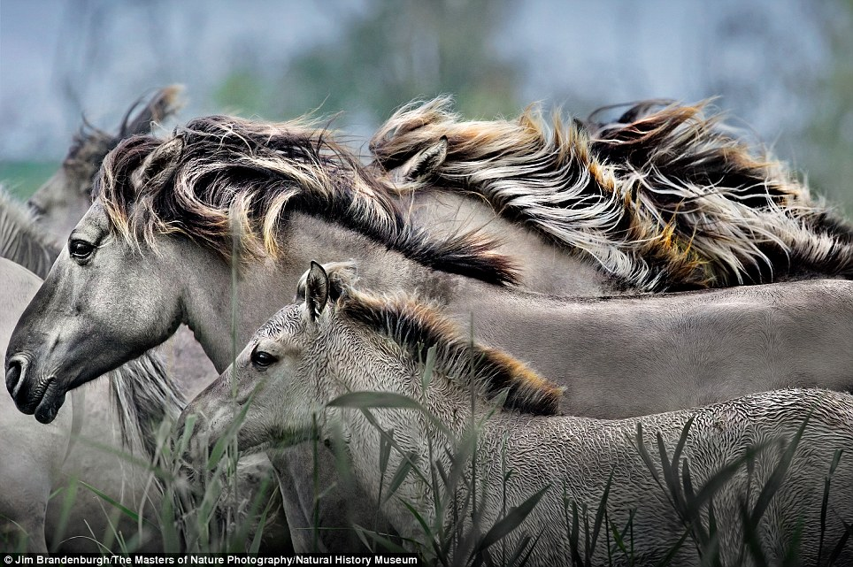 Mane image: Horse Spirit by Jim Brandenburgh is in a new book book bringing together the work of ten of the world's greatest wildlife photographers for the first time