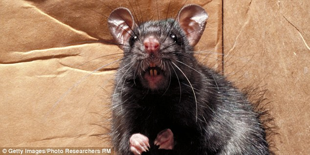 The rat burger has received glowing reviews from customers and critics (stock image)
