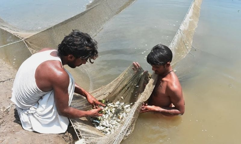 Two fishermen sort the trash fish caught in their net. — Photo by author