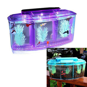 Betta fish tanks with light cube aquarium starter kit for Betta fish tank light