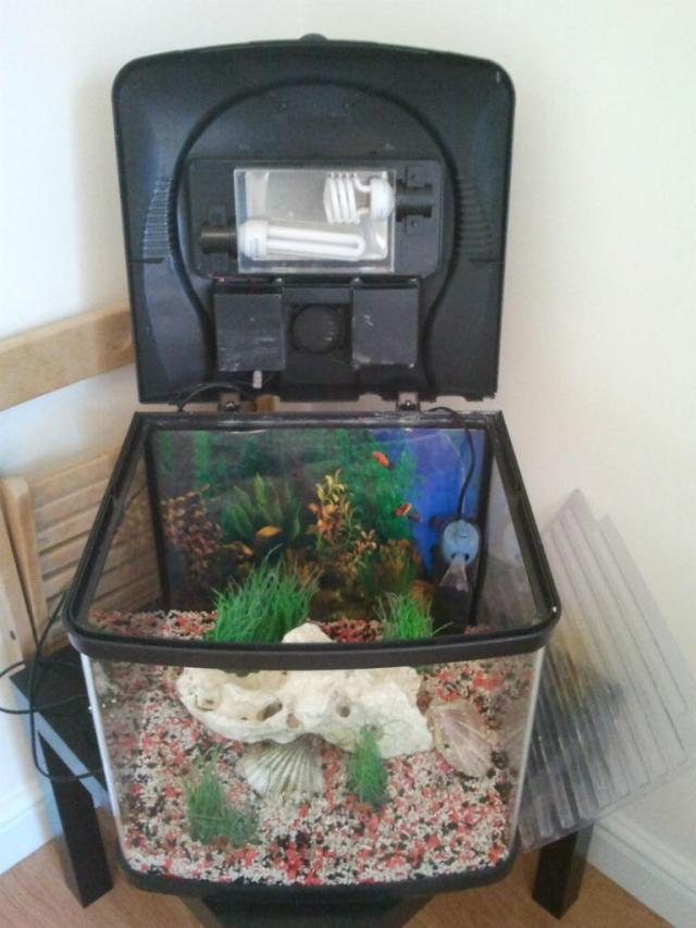 fish pod aquarium 48 - Interpet Fish Pod Aquarium 48 L | United Kingdom | Gumtree 2017 - Fish ...