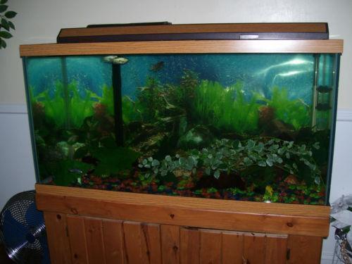 100 gallon fish tank malaysia 100 gallon fish tank kit for 100 gallon fish tank
