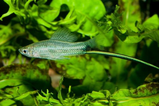 Top 10 Freshwater Aquarium Fish | eBay