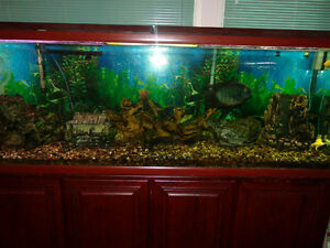 oceanic fish tank 150 gallon fish tank complete with canister filter