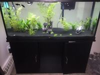 fish tank and stand live planted 55 gallon community tank fish