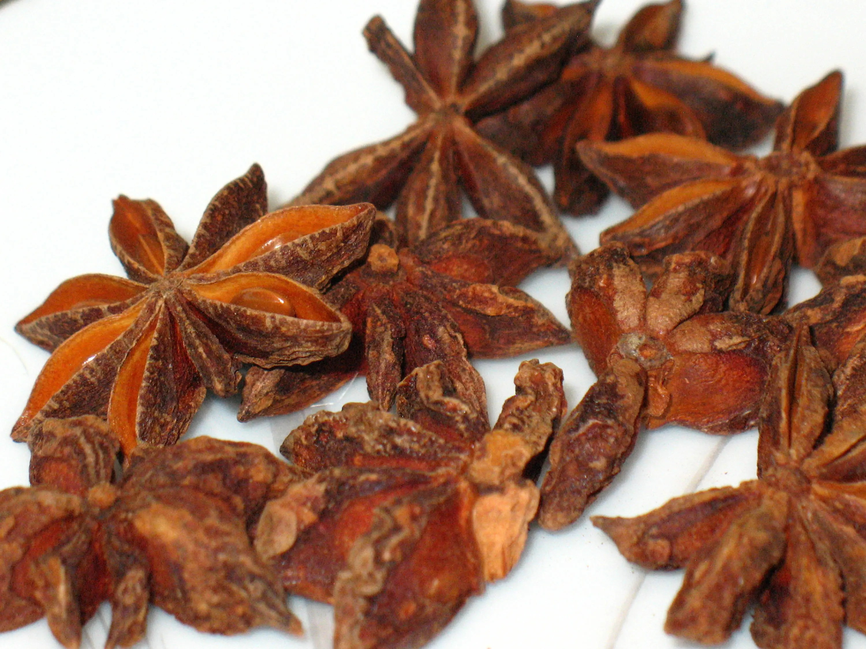 Robust Star Star Off Evil Star Anise Plant Nz Star Anise Plant Wiki houzz-03 Star Anise Plant