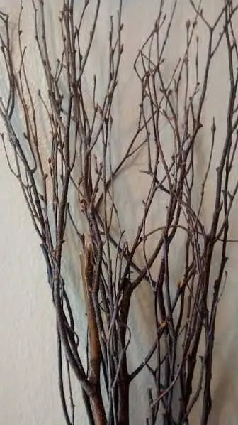 Birch Tree Branches 15 Tall birch branches bulk birch   Etsy Birch Tree Branches  25 individual branches  4  5    Great For Rustic  Country Wedding Decorating