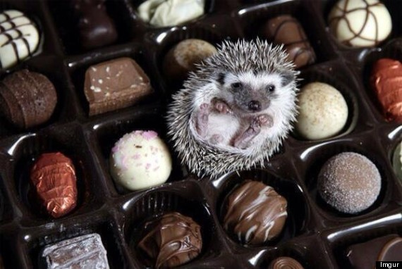 candy hedgehog