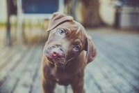 o-DOG-COCKED-HEAD-facebook.jpg