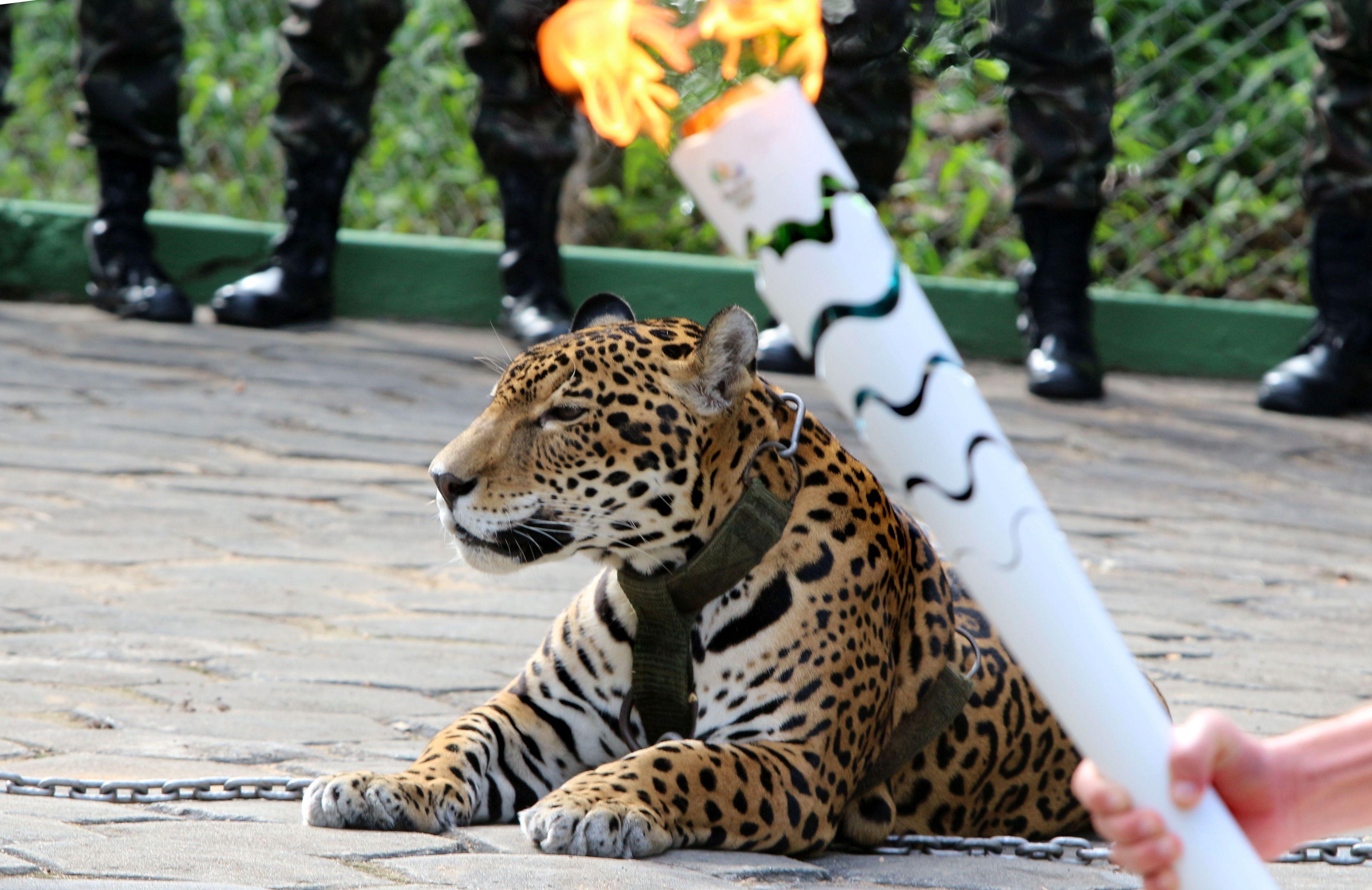 jaguar rio