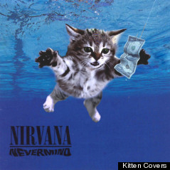 nirvana cover kitten