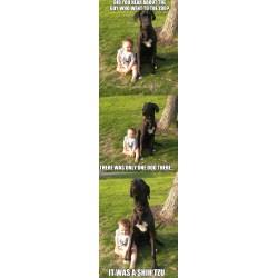 Small Crop Of Bad Joke Dog