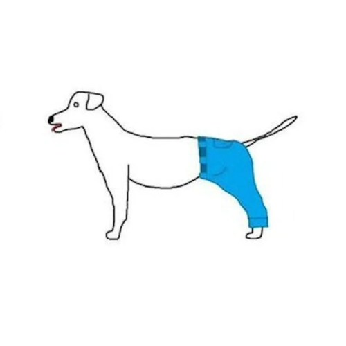 Medium Crop Of If A Dog Wore Pants