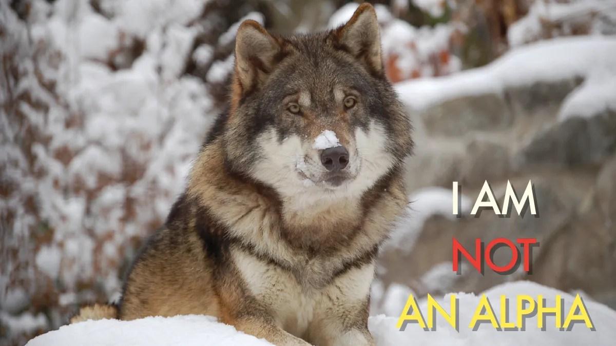 Fullsize Of Male Wolf Names
