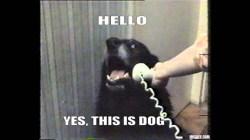 Small Of Sad Dog Meme
