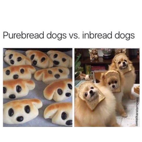 Medium Crop Of Happy Dog Meme