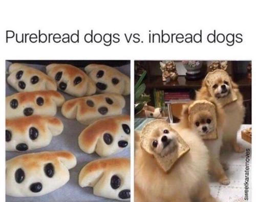 Medium Of Happy Dog Meme