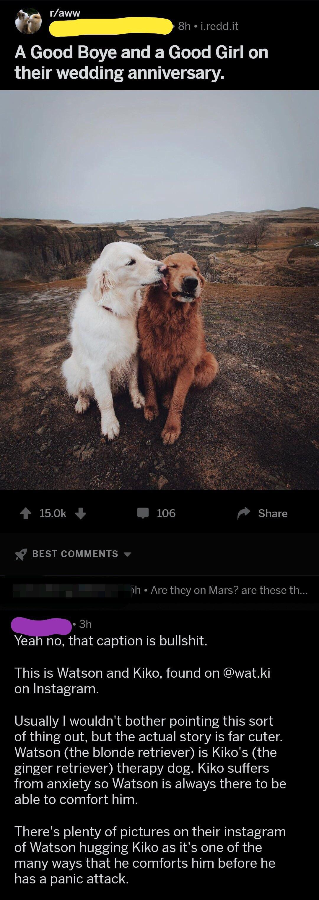 Fullsize Of We Dont Deserve Dogs