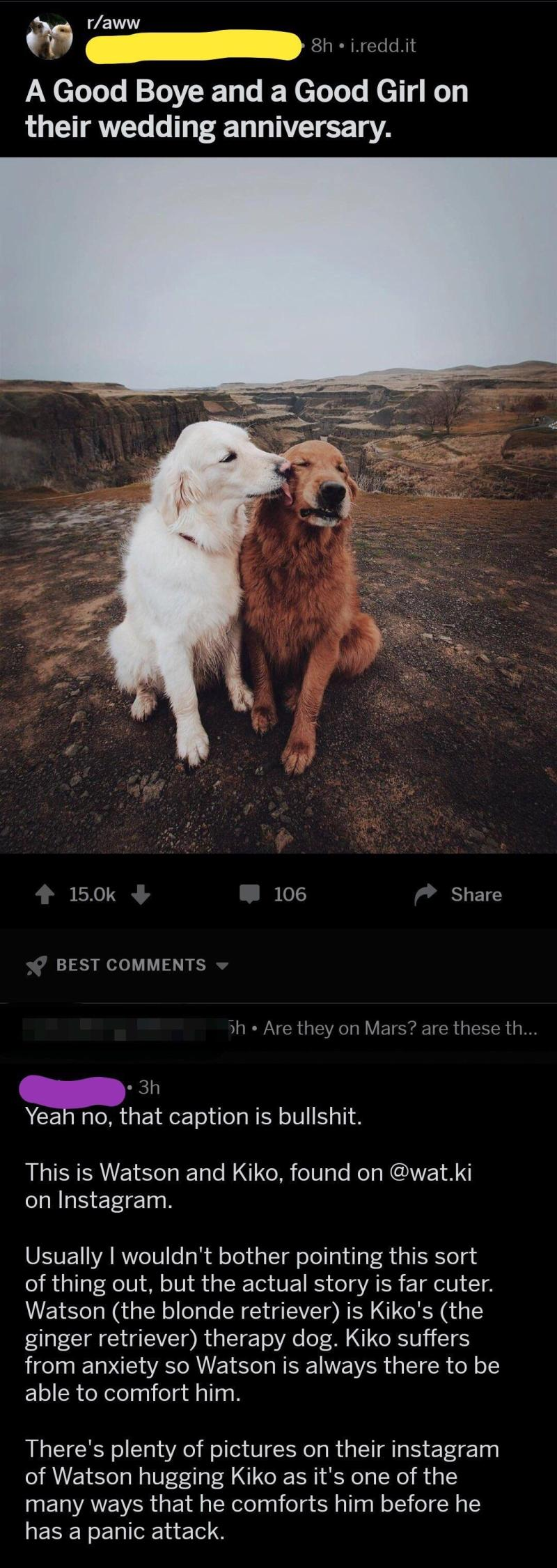 Large Of We Dont Deserve Dogs