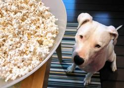 Small Of Can Dogs Have Popcorn