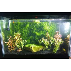 Fantastic Kerala Java Moss Freshwaterthanks Thanks To Guy That Recommended Making A Java Moss Wall Instead Java Moss Sale Online Sale houzz-03 Java Moss For Sale