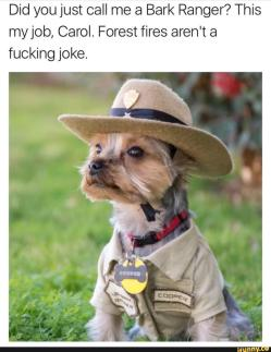 Great Bark Bark Memes Two Dog Joke Meme Terrible Joke Dog Meme