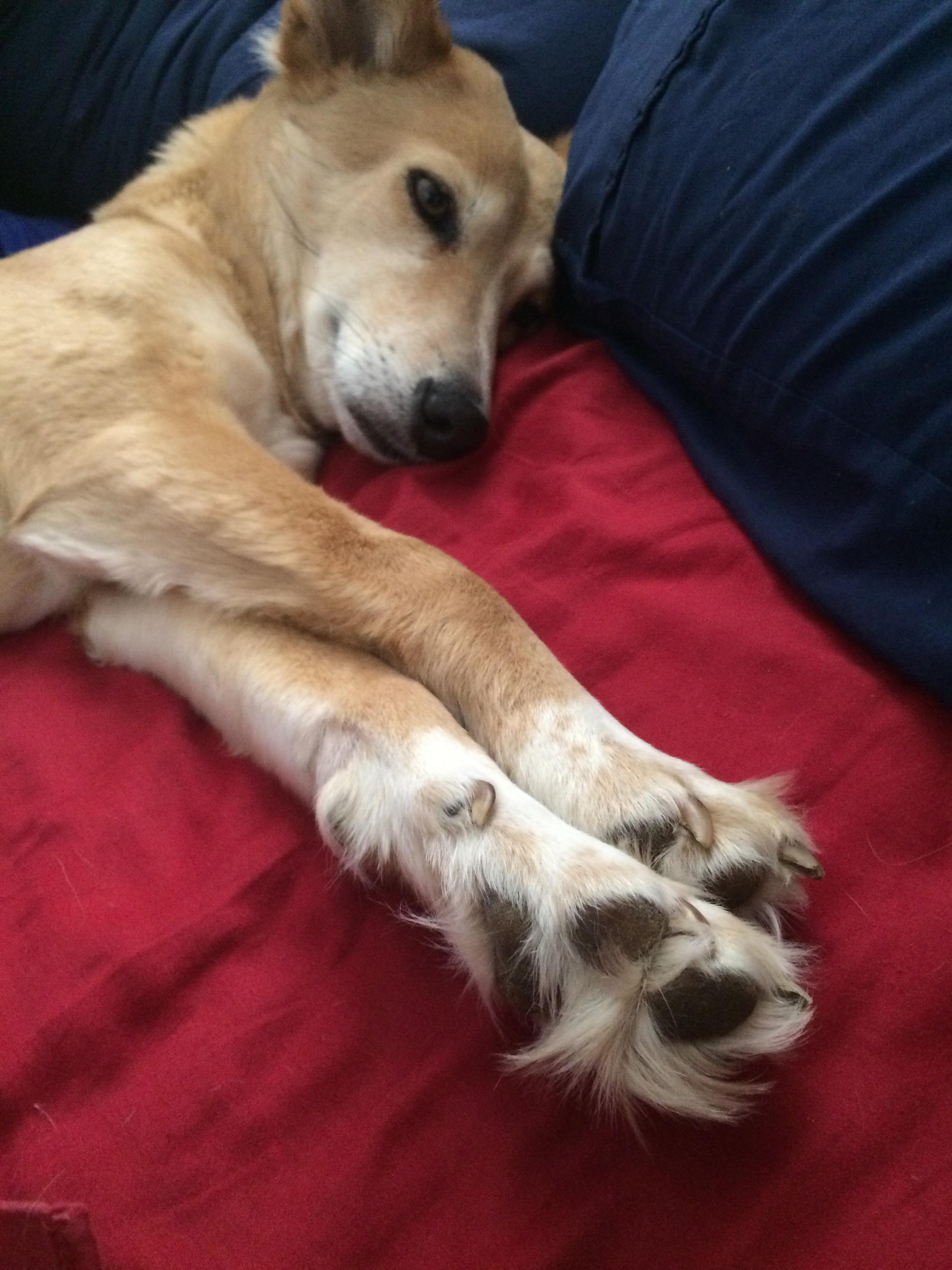 Fullsize Of How Many Toes Does A Dog Have