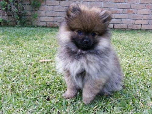 Medium Of Teddy Bear Dog