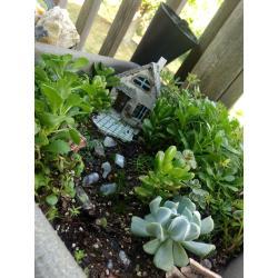 Small Crop Of Succulent Fairy Gardens