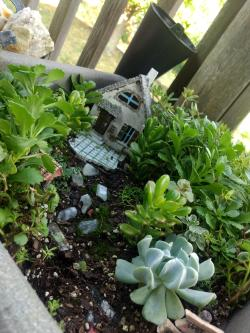 Small Of Succulent Fairy Gardens