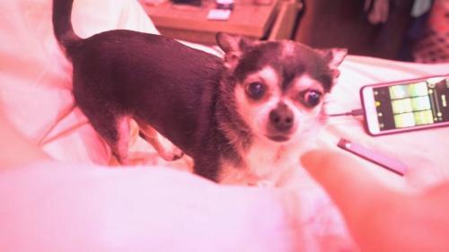 Medium Of Jenna Marbles Dogs