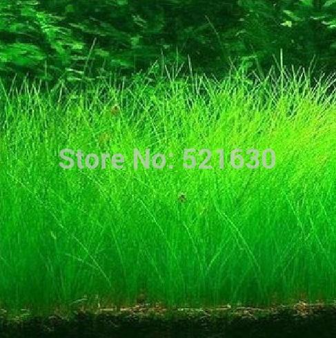 Aquarium Grass Promotion Online Shopping for Promotional Aquarium