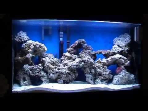 How to set up a marine tank Beginners   YouTube