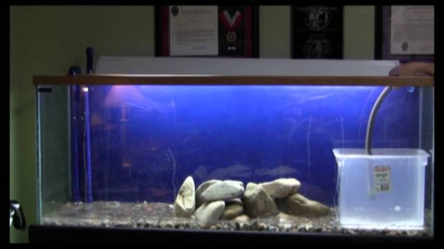 Setting up my 90 Gallon Fish Tank   YouTube