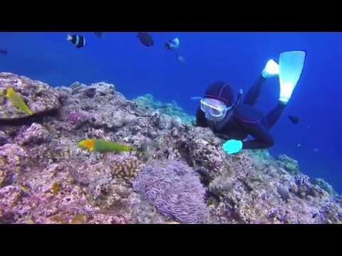 11月の沖縄、真栄田岬で素潜り! Recreational Freediving in Japan!