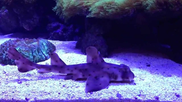 Saltwater Aquarium Sharks Saltwater Sharks 2017 Fish