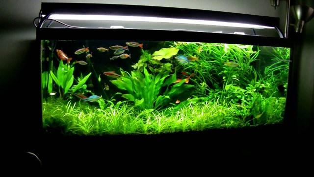 75 Gallon Planted Aquarium March 2013   YouTube