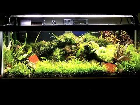 stargrass in my 20 gallon long planted aquarium   YouTube