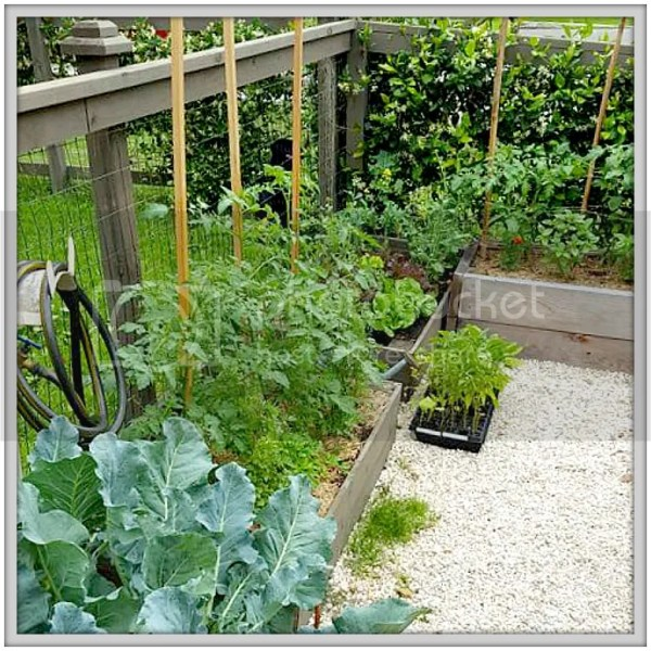 A Garden Story: Part Two.....okra and tomatoes and cukes, oh my!