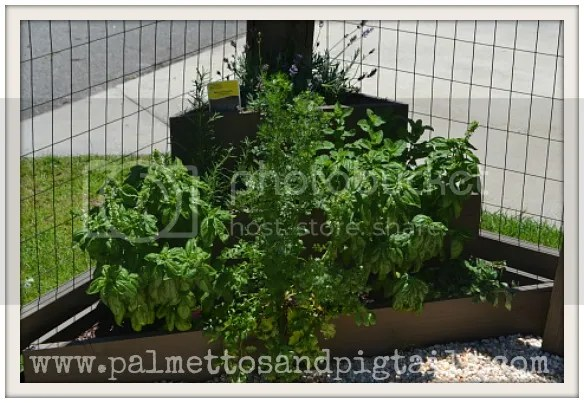 DIY Vegetable Garden by PalmettosandPigtails.com