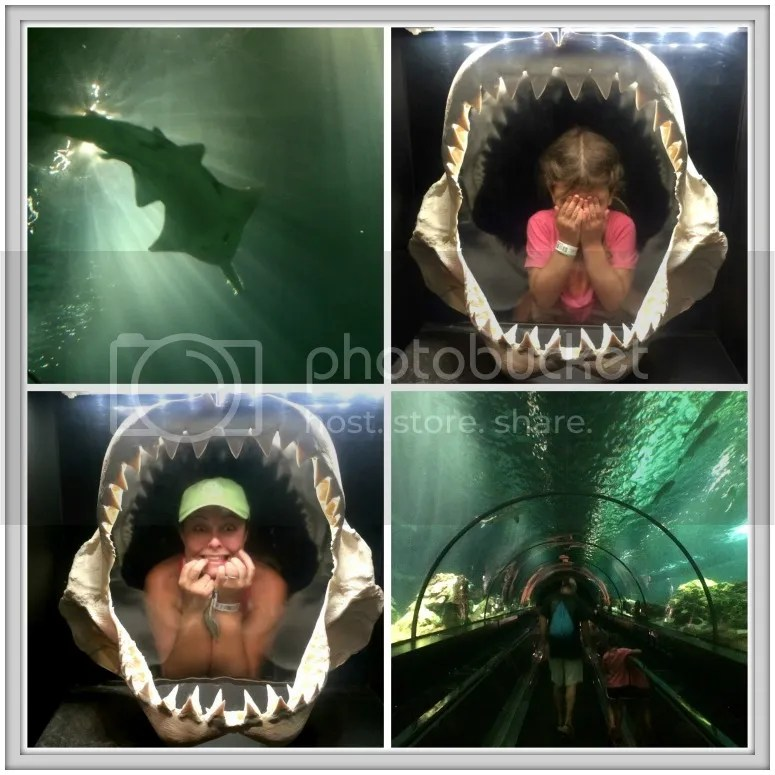 Seaworld has many indoor exhibits {including a shark tunnel!}, so it is a great activity for a cloudy day in Orlando