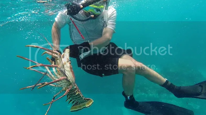 Tate with large lobster