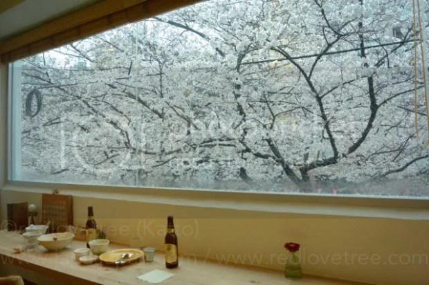 photo Sakura-meguro-12.jpg