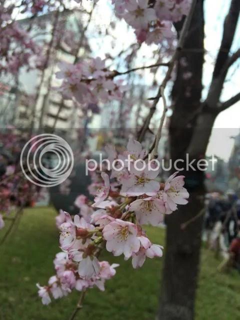 photo IMG_3863.jpg