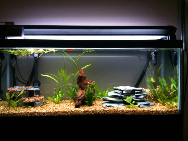 30 gallon fish tank long all glass aquarium for How many fish in a 20 gallon tank