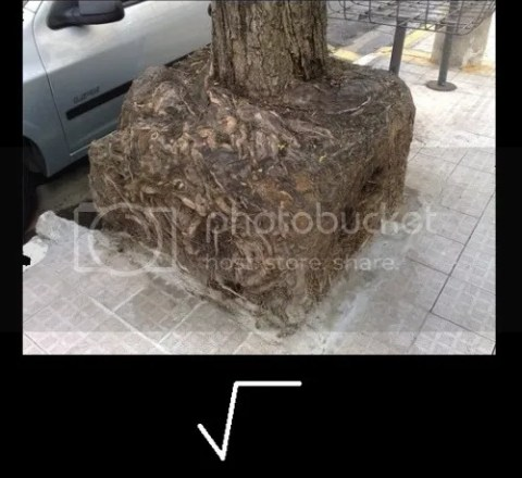 real life square root