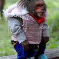 Just A Primate Wearing A Pink Jacket