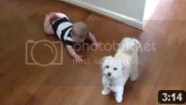 video anak bayi yang sedang tertawa melihat tingkah anjing kecil lucu